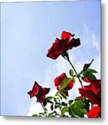Sunlit Roses Metal Print