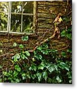 Sunlit Window And Grapevines Metal Print by HD Connelly