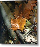 Sunning In The Stream Metal Print