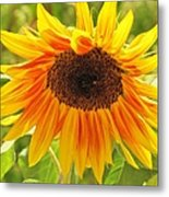Sunny Bright Sunflower Metal Print