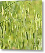 Sunny Day At The Oat Field Metal Print