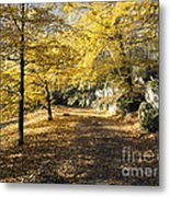 Sunny Day In The Autumn Park Metal Print