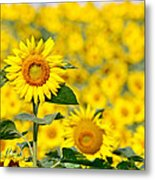 Sunny Disposition Metal Print