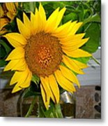 Sunny In Md 4 Metal Print