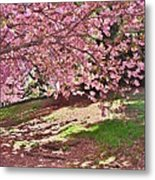Sunny Patch Under The Cherry Trees Metal Print