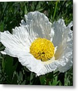 Sunny Side Flower Metal Print