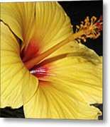 Sunny Yellow Hibiscus Flower Metal Print