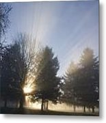 Sunray Through Trees And Fog Metal Print