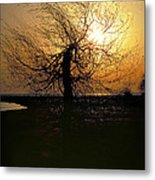 Sunrise And Tree Metal Print