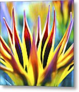 Sunrise Flower Metal Print
