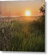 Sunrise On A Dew-covered Cattle Pasture Metal Print