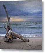 Sunrise On The Beach With Driftwood At Oscoda Metal Print