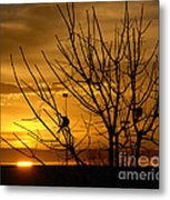 Sunrise Song Metal Print