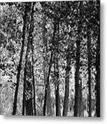 Sunrising On The Trees Metal Print