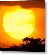 Sunset And Bird Metal Print