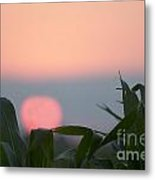 Sunset And Corn Metal Print