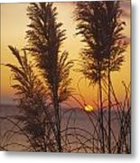 Sunset On The Mediterranean Sea And Plant Metal Print
