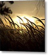 Sunset Behind Tall Grass Metal Print