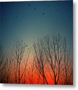 Sunset Behind Trees Metal Print by Luis Mariano González