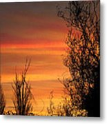 Sunset Branches Metal Print