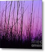 Sunset Grasses Metal Print