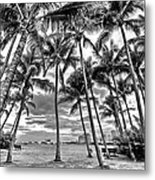 Sunset Grove At Palm Beach Metal Print