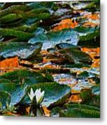 Sunset On A Lily Pond Metal Print