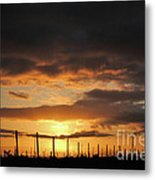 Sunset On The Vineyards Metal Print by Nancy Chambers