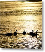 Sunset Over Canada Geese Metal Print by Joseph Rossi