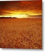 Sunset Over Wheat Field Metal Print