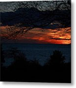 Sunset Tree Closeup Metal Print