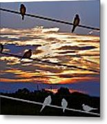 Sunsets And Birds Metal Print