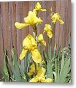 Sunshine Bright Yellow Iris Metal Print