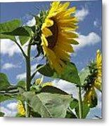 Sunshine Flowers Metal Print