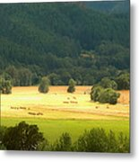 Sunshine In The Valley Metal Print