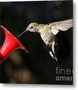 Sunshine On Hummingbird Metal Print