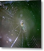 Sunshine On Swamp Spider Metal Print
