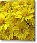 Sunshine Yellow Chrysanthemums Metal Print