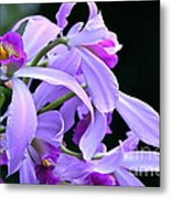 Super Orchid Metal Print