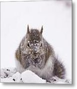 Suppers Cold Metal Print