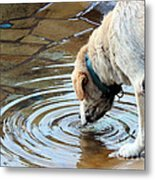 Sure Is Good On A Hot Day Metal Print