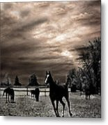 Surreal Horses Infrared Nature  Metal Print by Kathy Fornal
