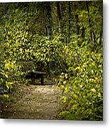 Surrounded By American Beauty Metal Print by Kim Henderson
