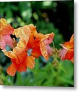 Suspended Blossoms Metal Print