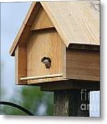 Swallow Box Home Metal Print