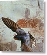 Swallow In Flight Metal Print