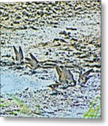Swallows At The River Metal Print