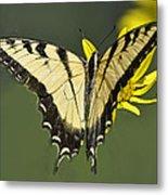 Swallowtail And Friend Metal Print