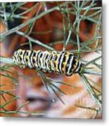 Swallowtail Caterpillar Metal Print