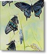 Swallowtail Story Metal Print